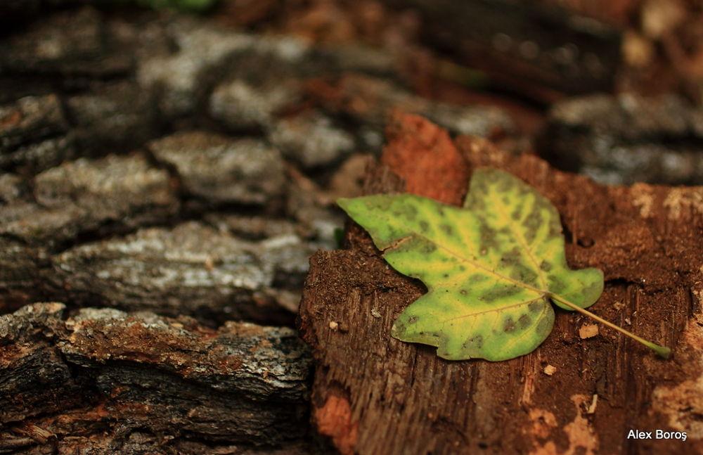 Autumnal I by Alex Boros
