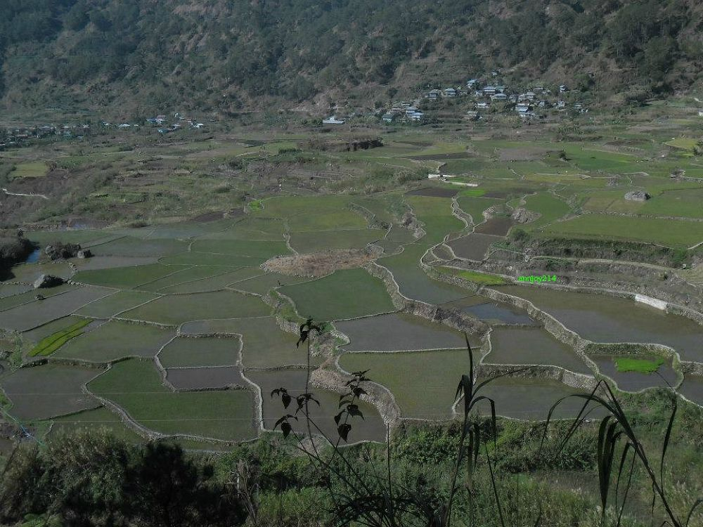rice paddies in Sagada,Philippines by joyvillafuertehafalla