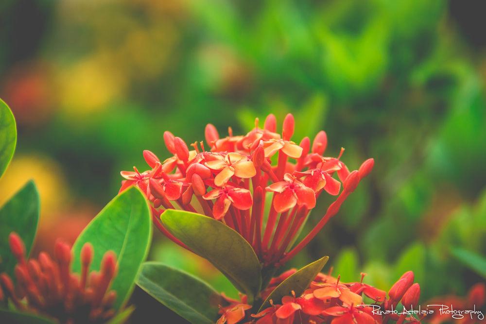 flower by renatoatalaia
