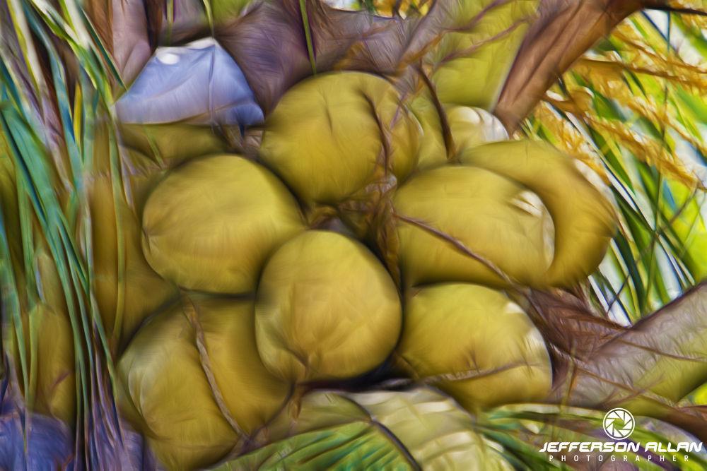 Fotos de cocos com efeitos by jeffersonallancps