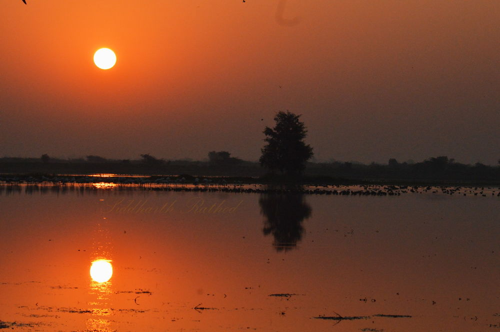 DSC_0889 by siddharthrathod2007