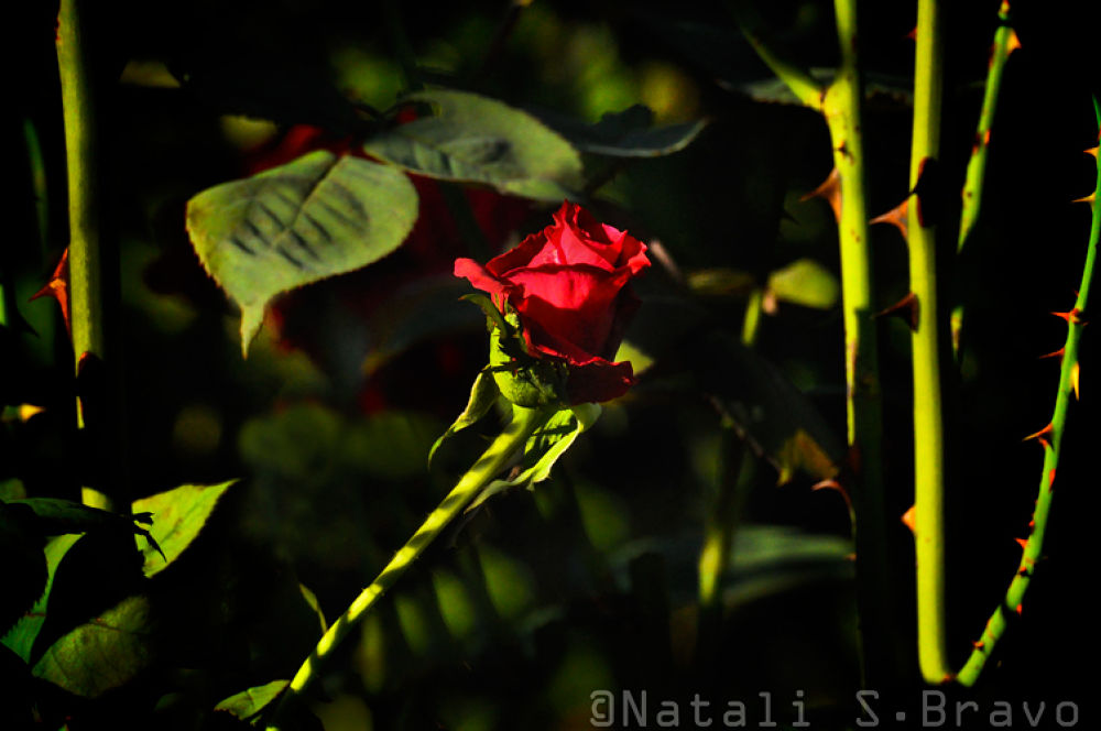 Inspired by beauty and the beast by Natali S. Bravo