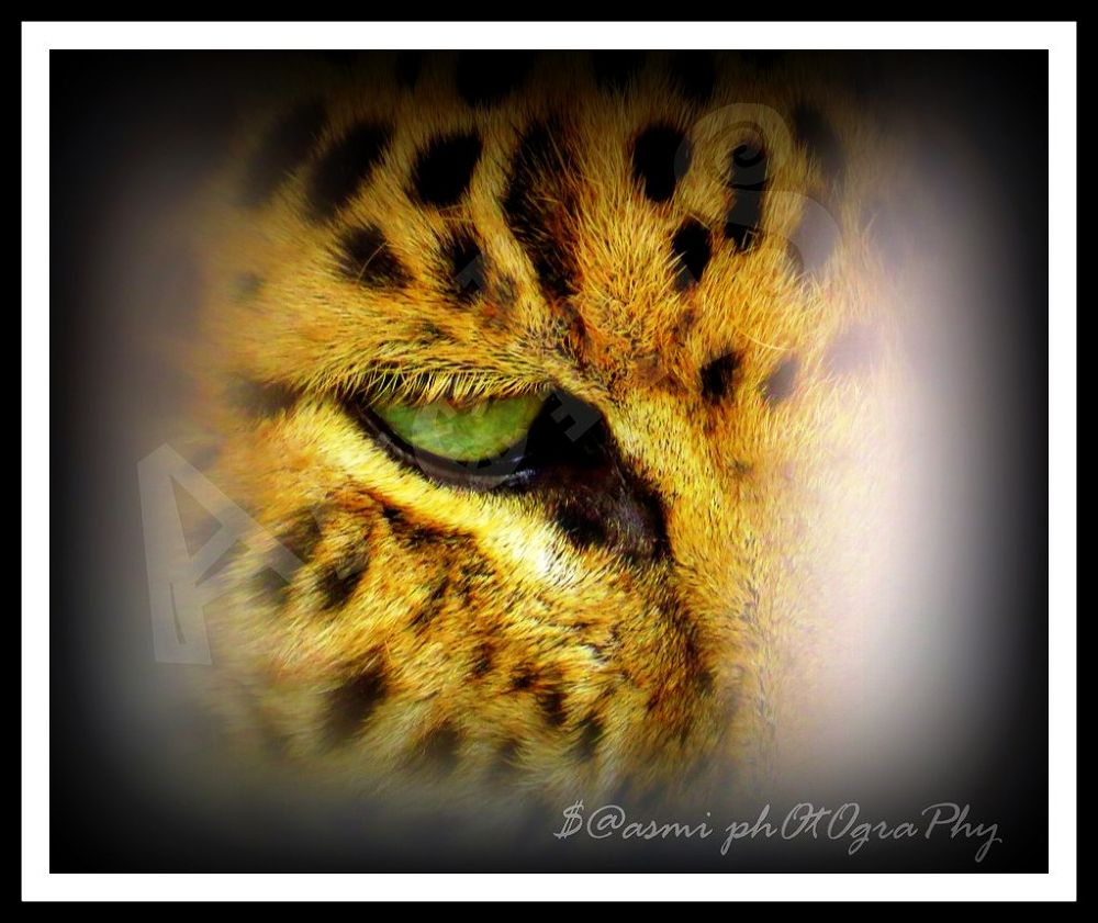 wild eye by FunKydudeArchiS