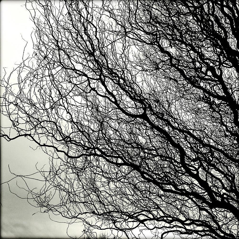 tree by AlpaChino