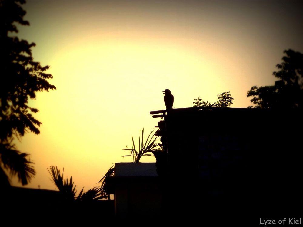 Lonely Bird by Neel