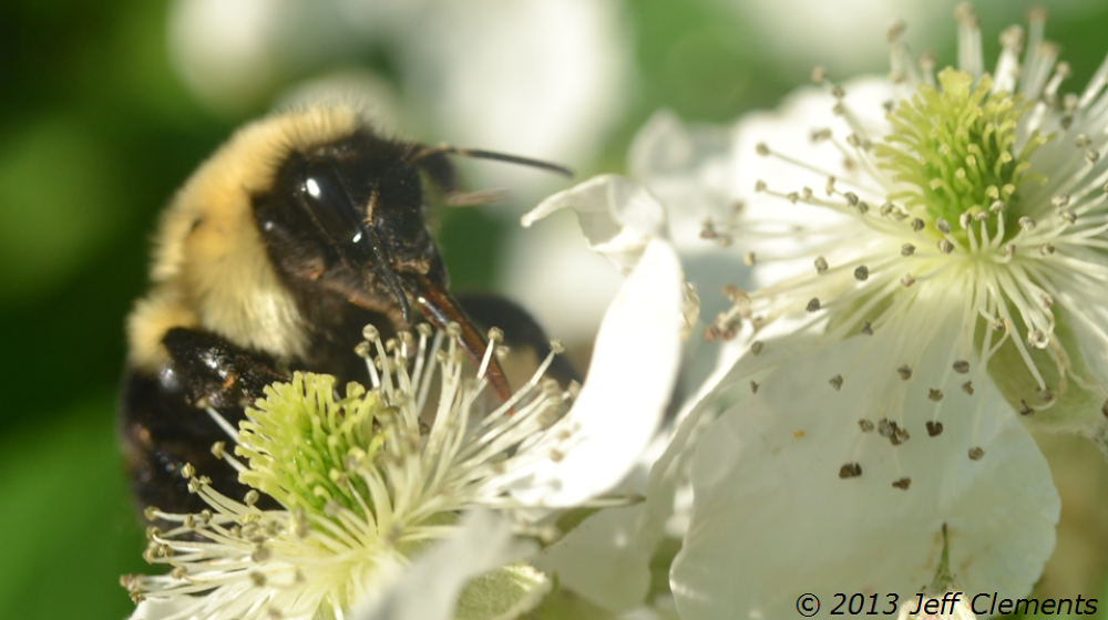 bee by jclements