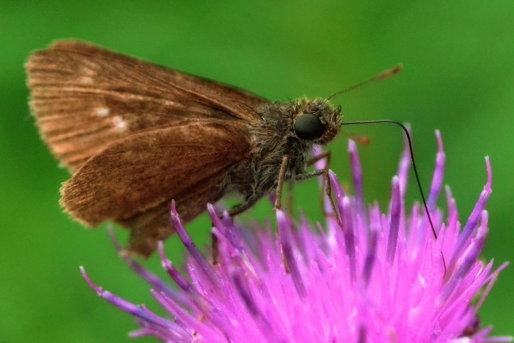 Skipper by jclements