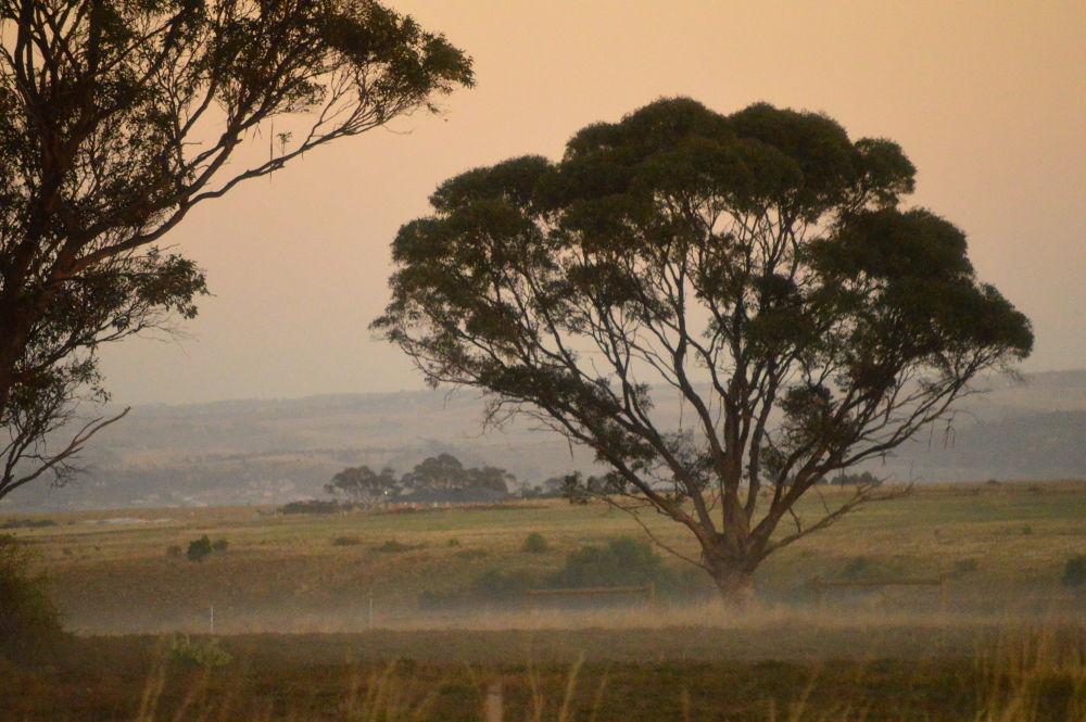 Light fog by Ian Winduss