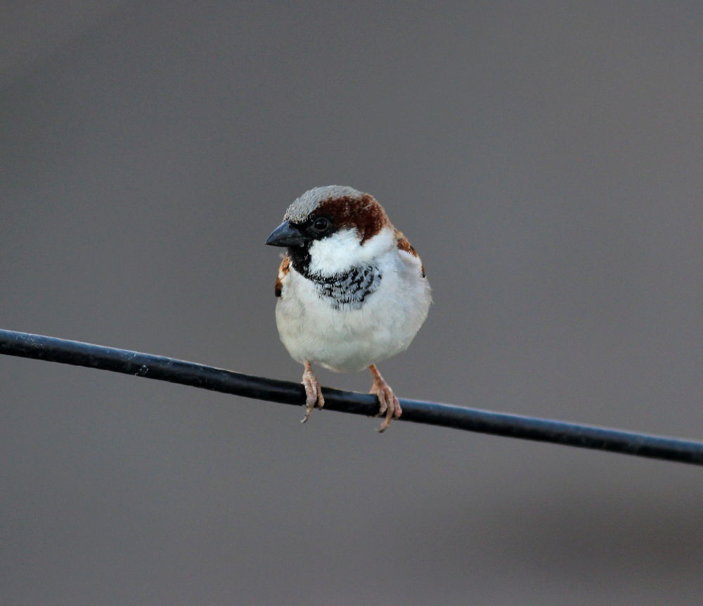 IMG_02441World Sparrow Day. by Nirav Mehta