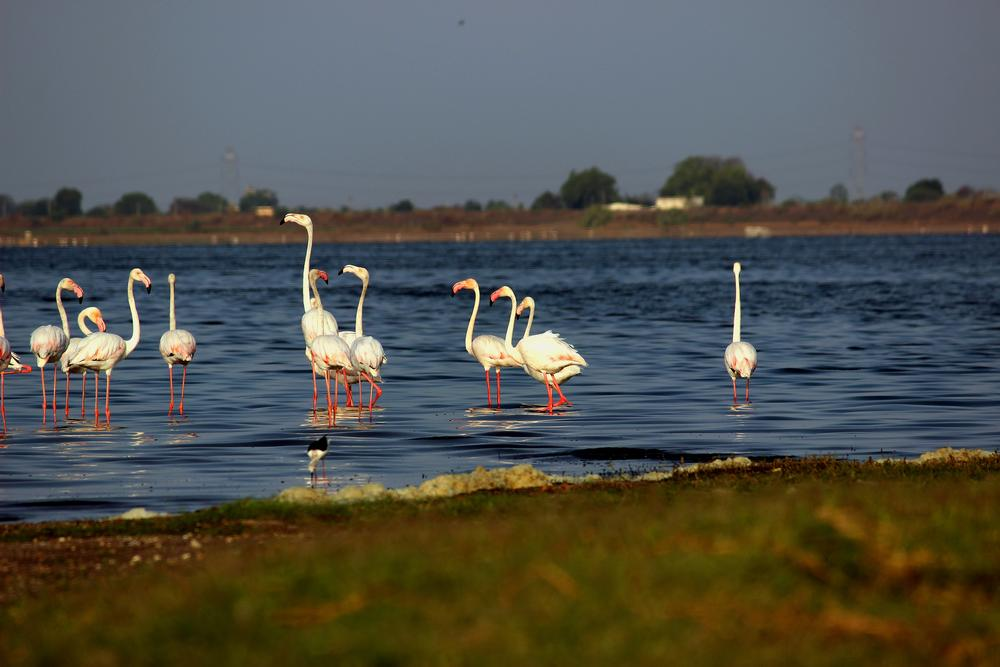 Photo in Nature #flamingos