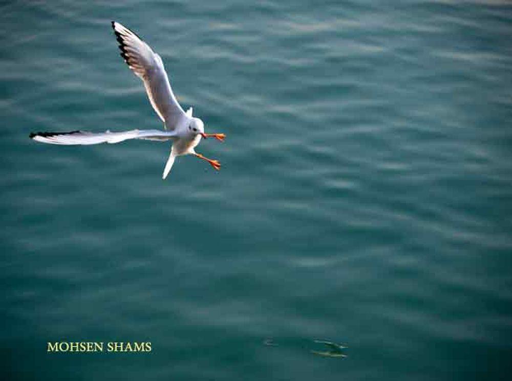 DSC_7613 by MOHSEN SHAMS