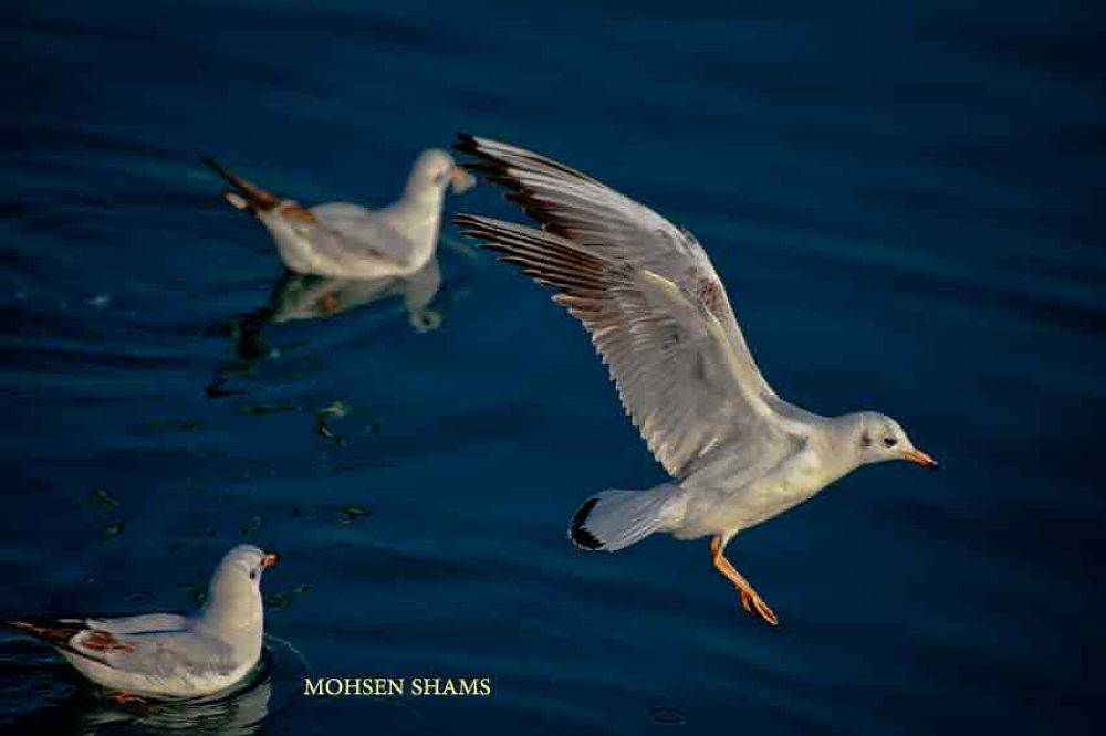 DSC_7597 by MOHSEN SHAMS