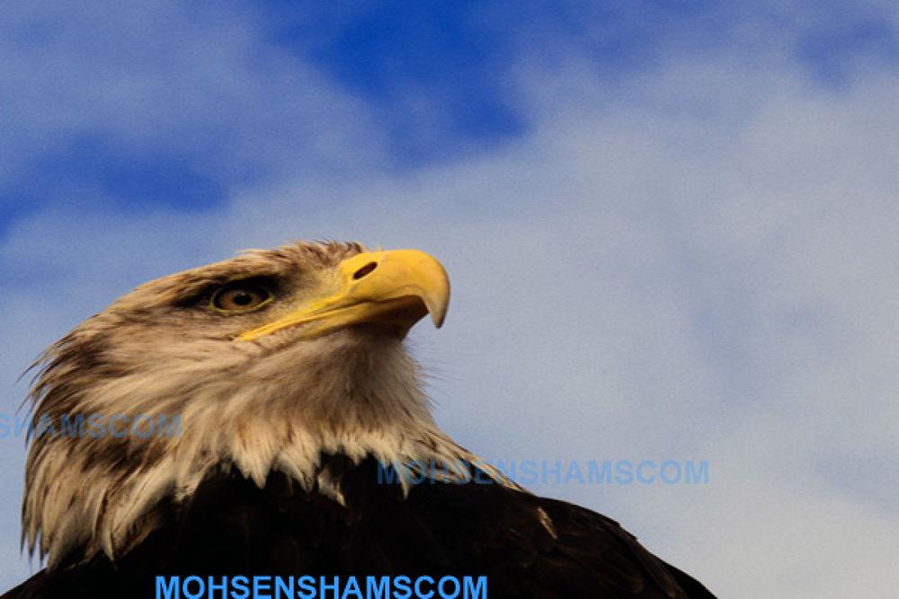 edited-0837 by MOHSEN SHAMS