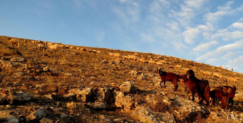 Doğa -Dağ by D.Yılmaz AVŞAR