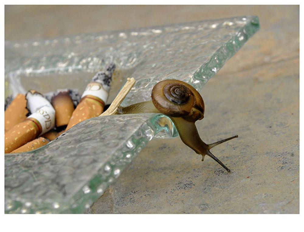 Quit smoking by omprakashparker