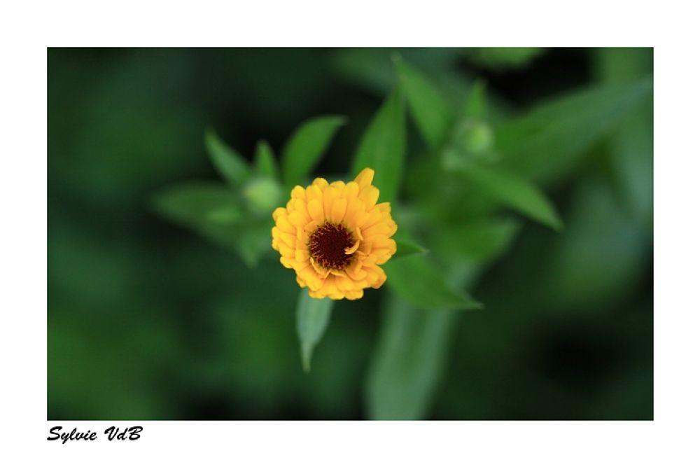 Gardenviews by sylvievdbphotography