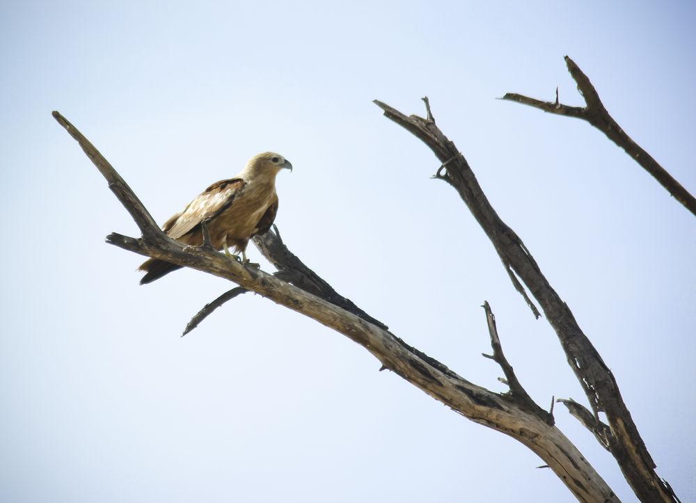 kite by freddyvictor