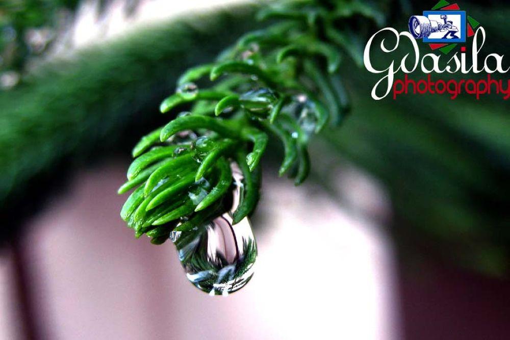 Hanging Drop by Govind Dasila (gdasila)