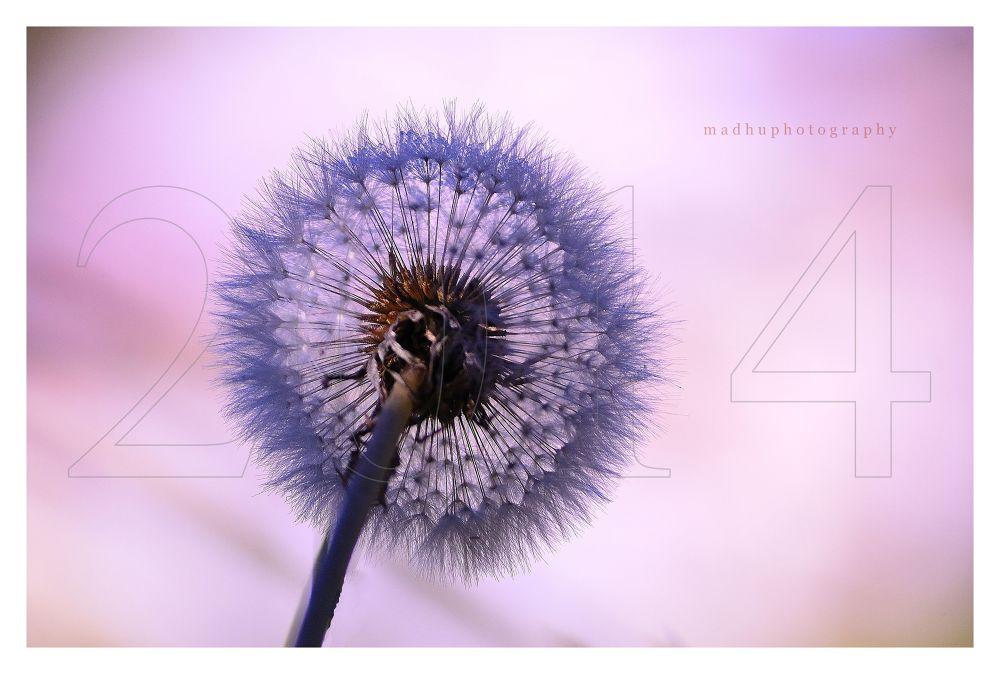 Photo in Random #nature #nikon
