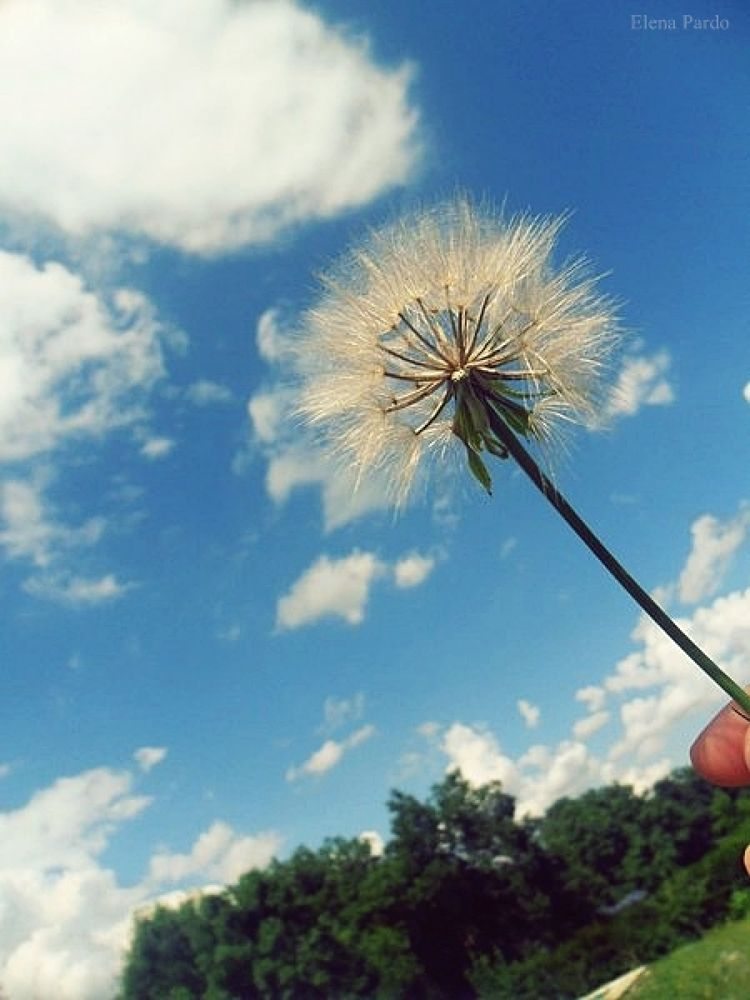 Photo in Random #spain #canon #dandelion #diente de leon #plants #nature #365 days #project 365 days #elena pardo #young photographer #photography