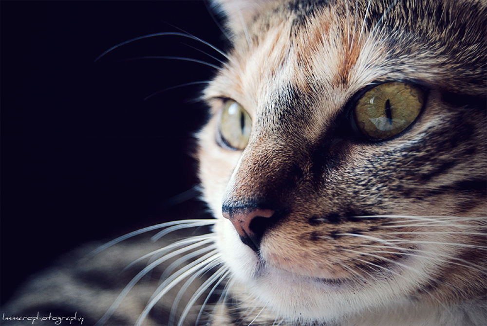 Kitty by ImmaroPhotography