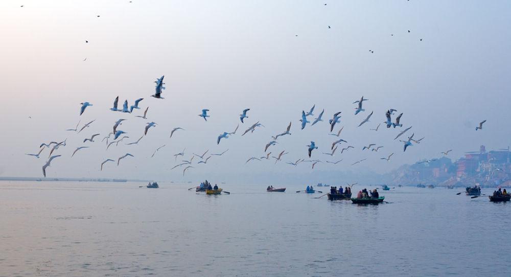 birds trail by santoshkpandey18