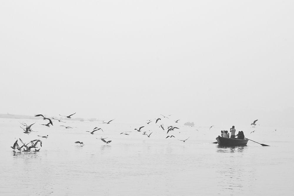 Photo in Random #ypa2013 #ganga #birds #varanasi #kashi