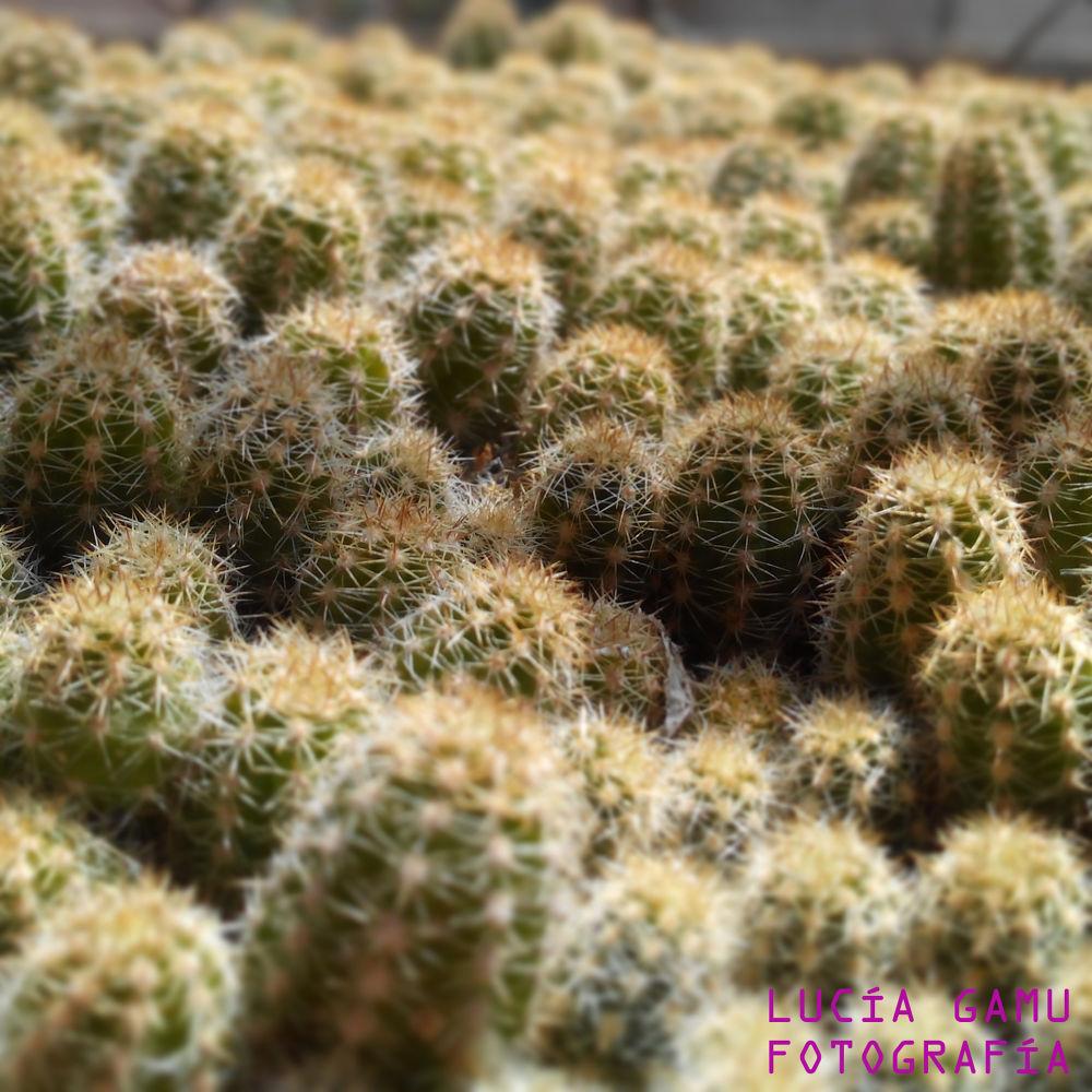 Poblado de cactus by LuciaGamuFotografia