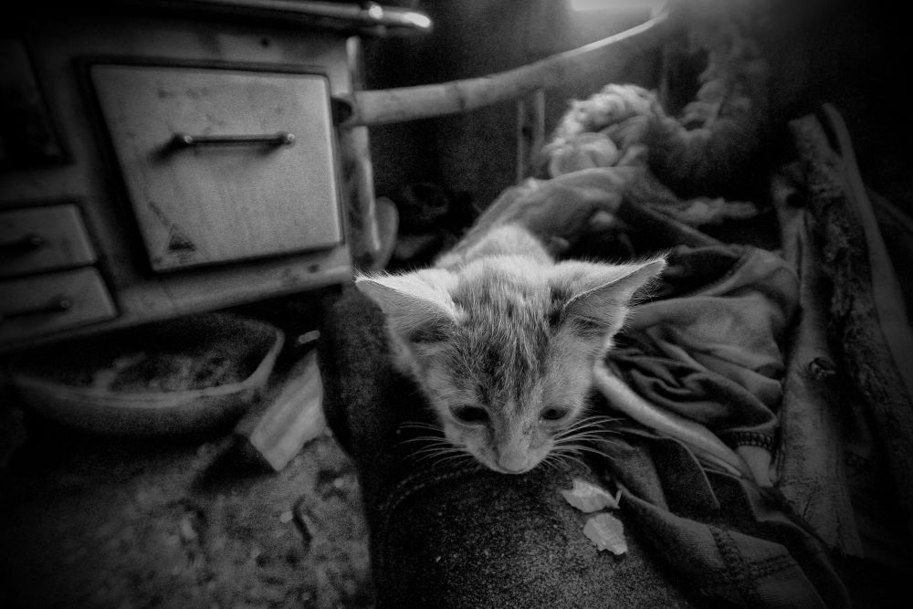 Gatito by puntodenfoquefotografia