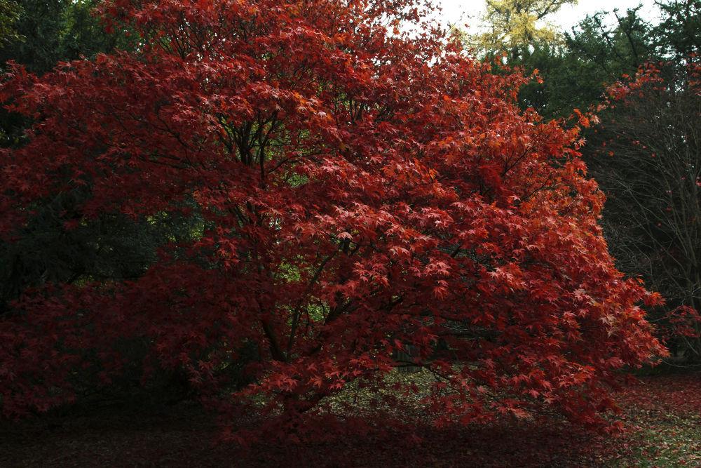 Autumn Tree's by shanekerry