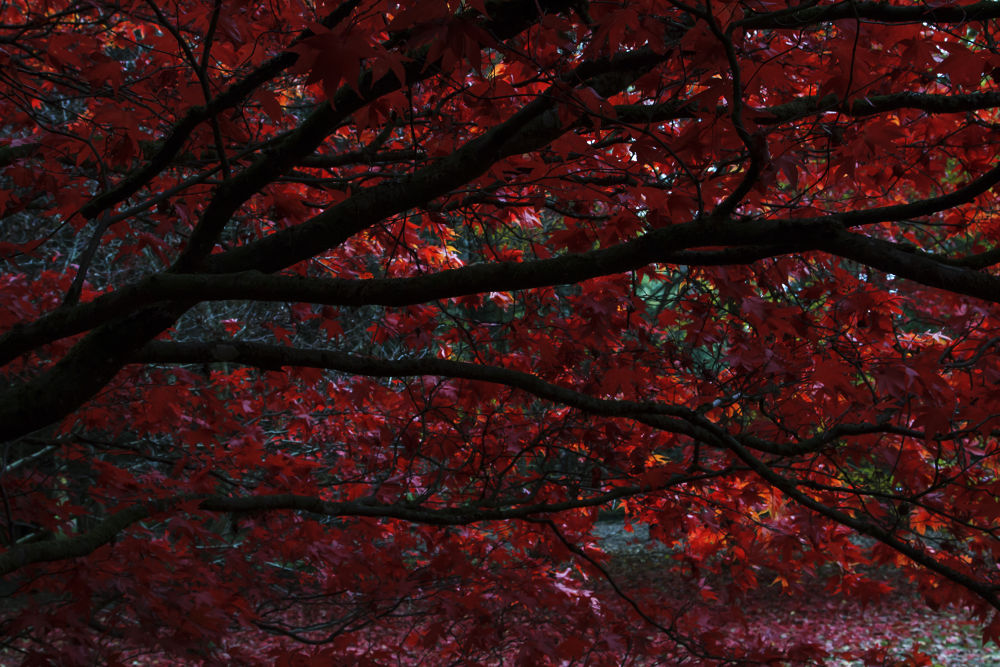 Autumn Tree's by shanekerry