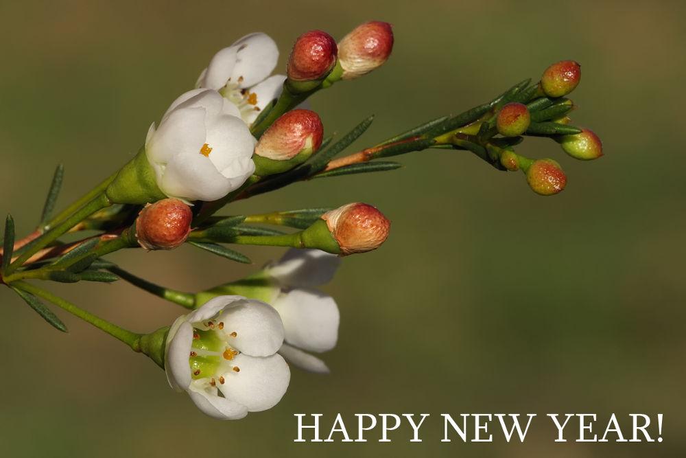 HAPPY NEW YEAR! by marhowie