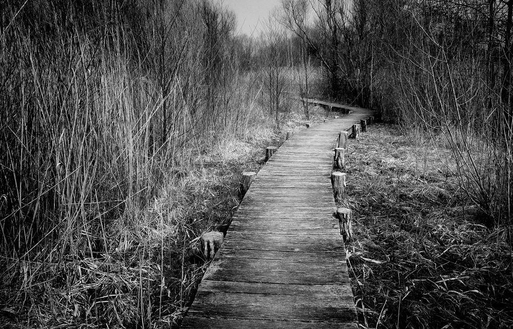 ... the way by Carlo Scherer