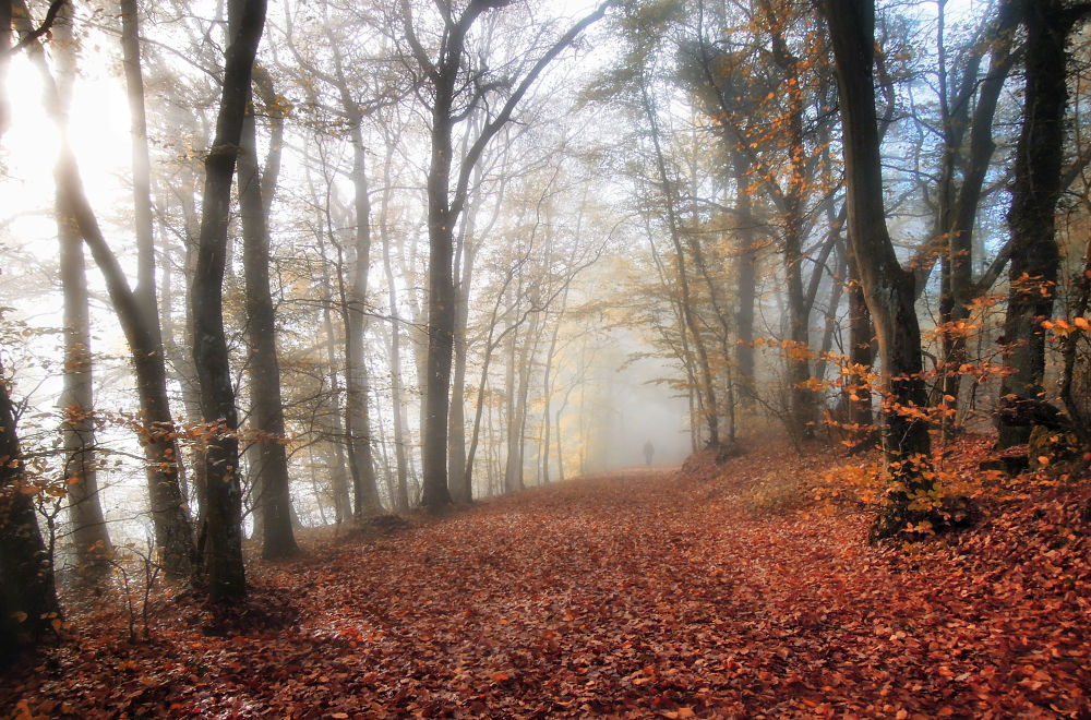 ... last day in octobre by Carlo Scherer