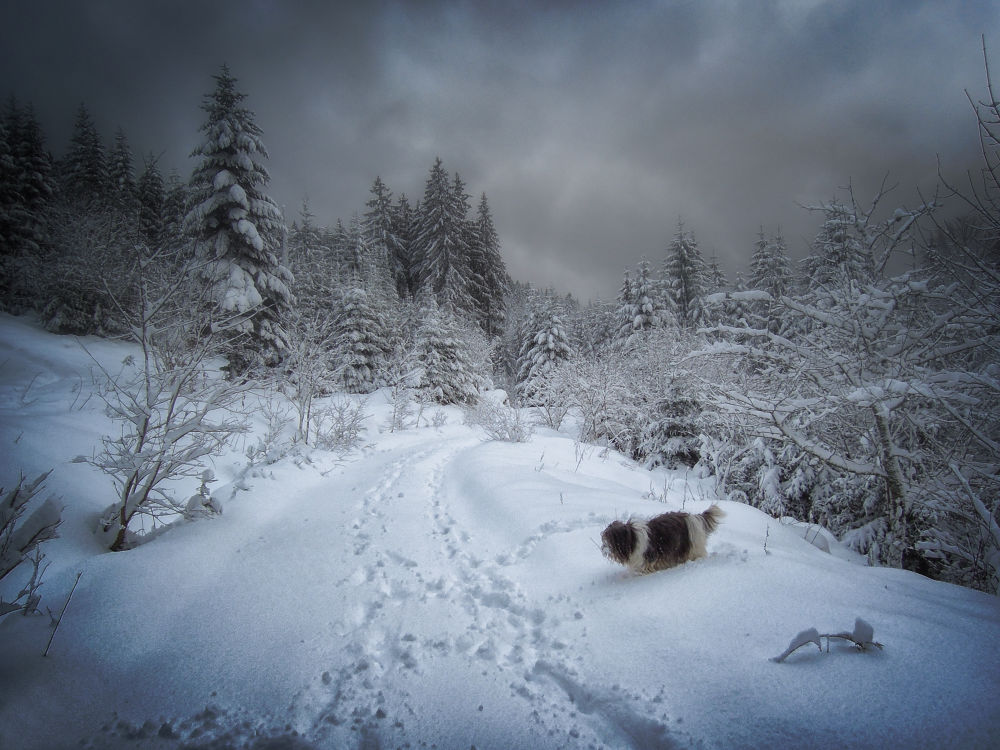 ... landscape in snow with dog :) by Carlo Scherer