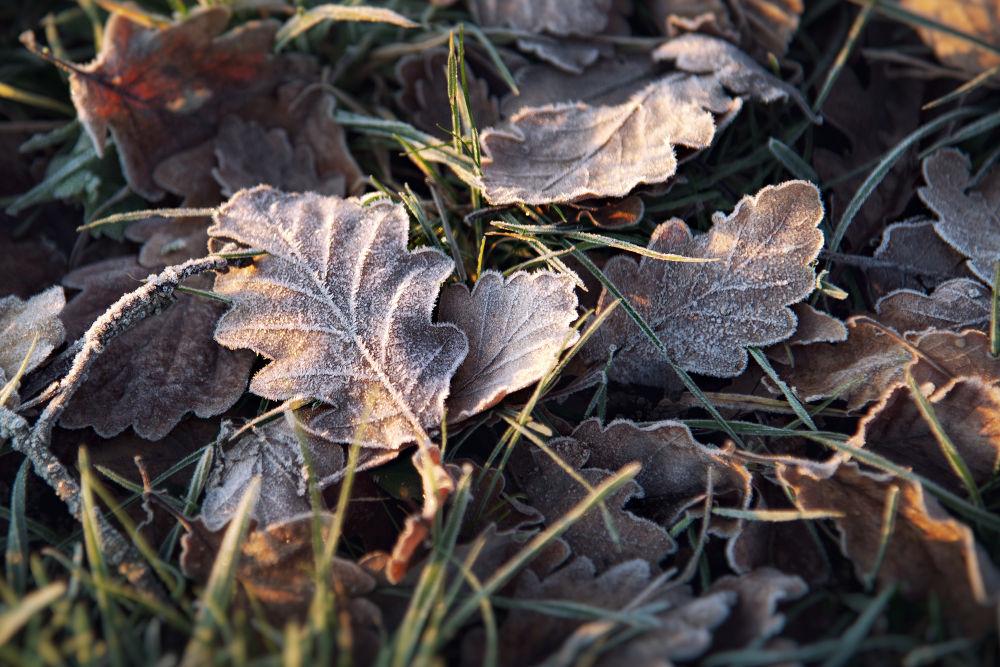... frosty leave by Carlo Scherer