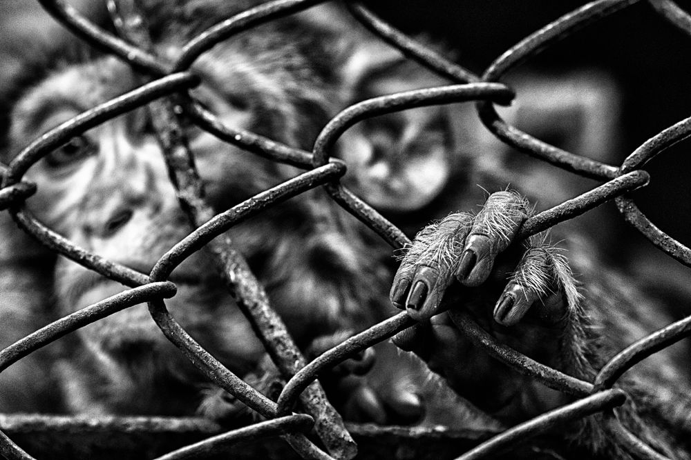 Caged.. by MD Tanver Hassan Rohan