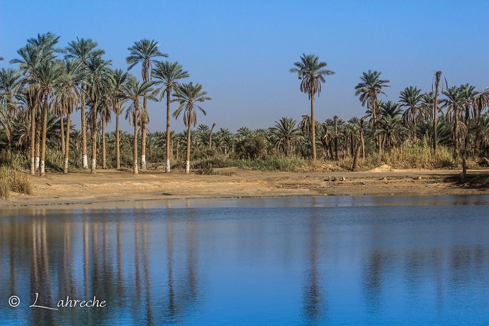 Oasis by lahreche