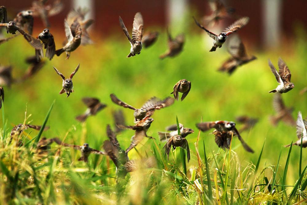 Rhythm of wings  by anjan2810