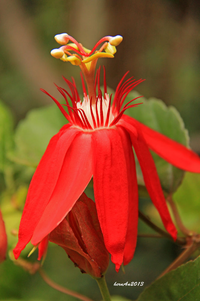 Bright red by hernangaspalinao3
