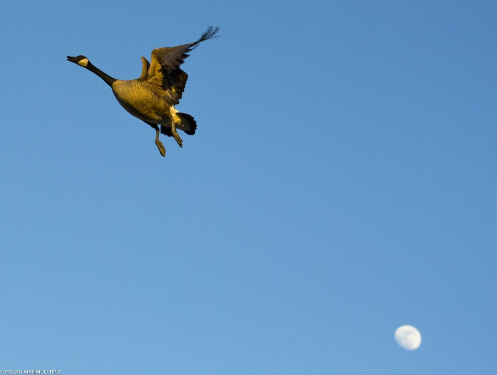 Leaving the moon by Hasan Mahmud Tipu