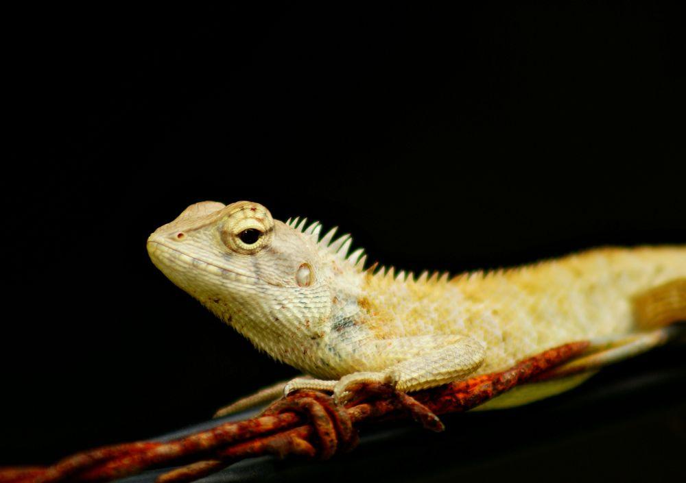 gecko by dzulkarnainahmad
