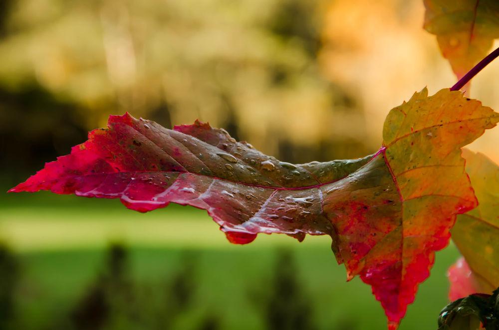 leaf by sammywongpun