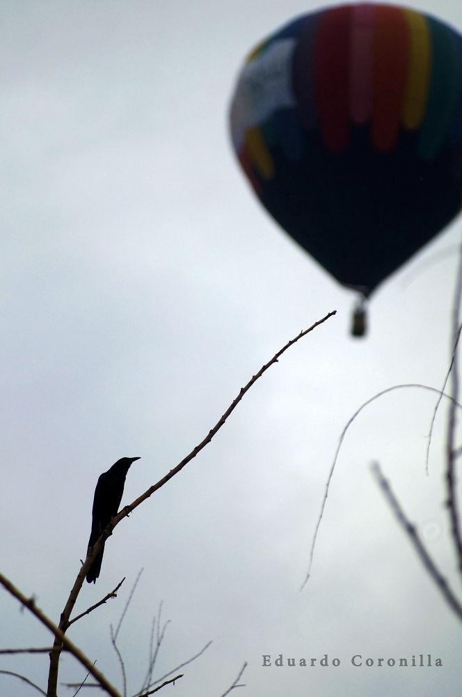 El cuervo y el globo by Eduardo Coronilla