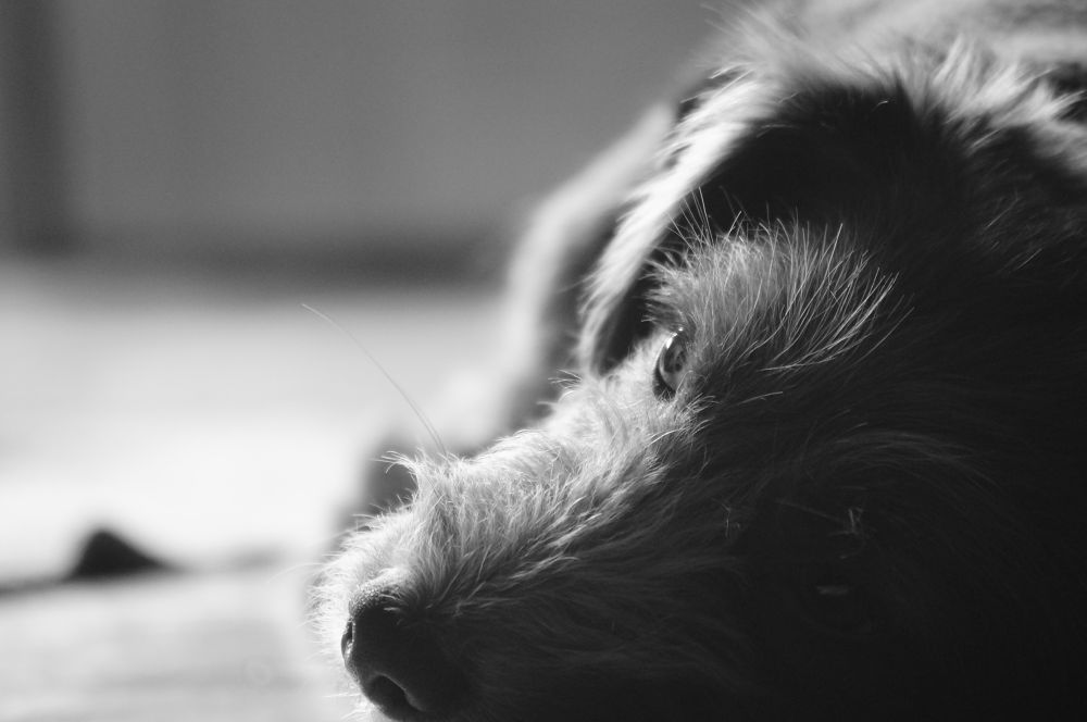 El perro by Eduardo Coronilla