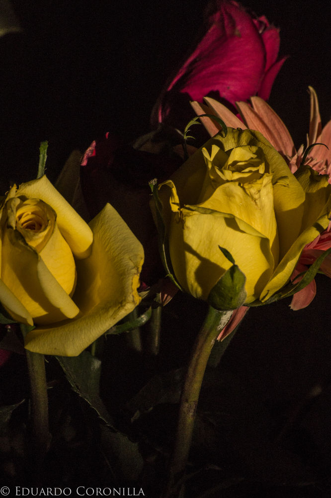 Flores by Eduardo Coronilla