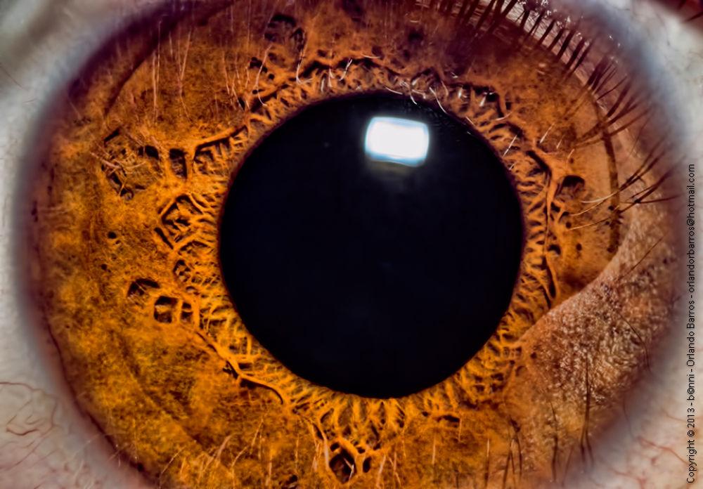 Human Eye by Orlando Barros