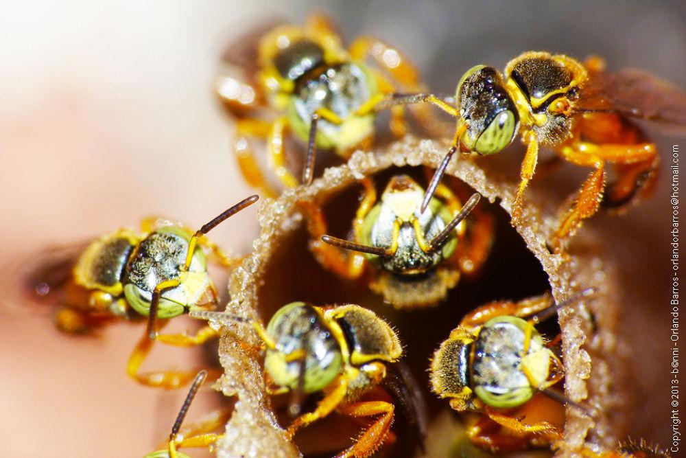 Bee by Orlando Barros