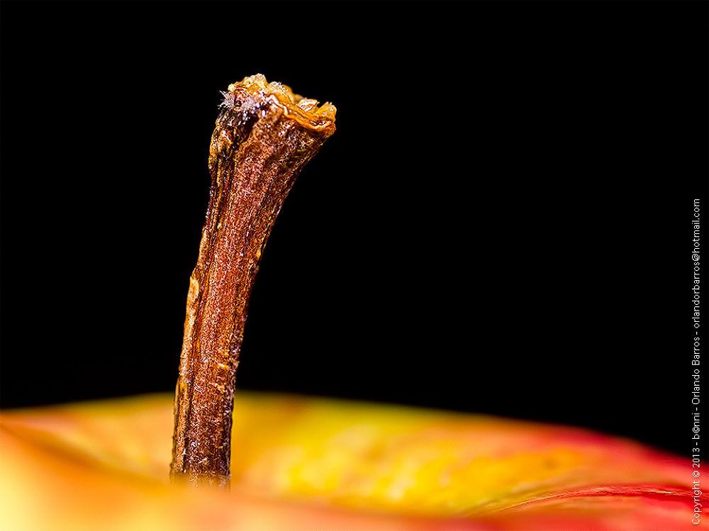 Apple by Orlando Barros