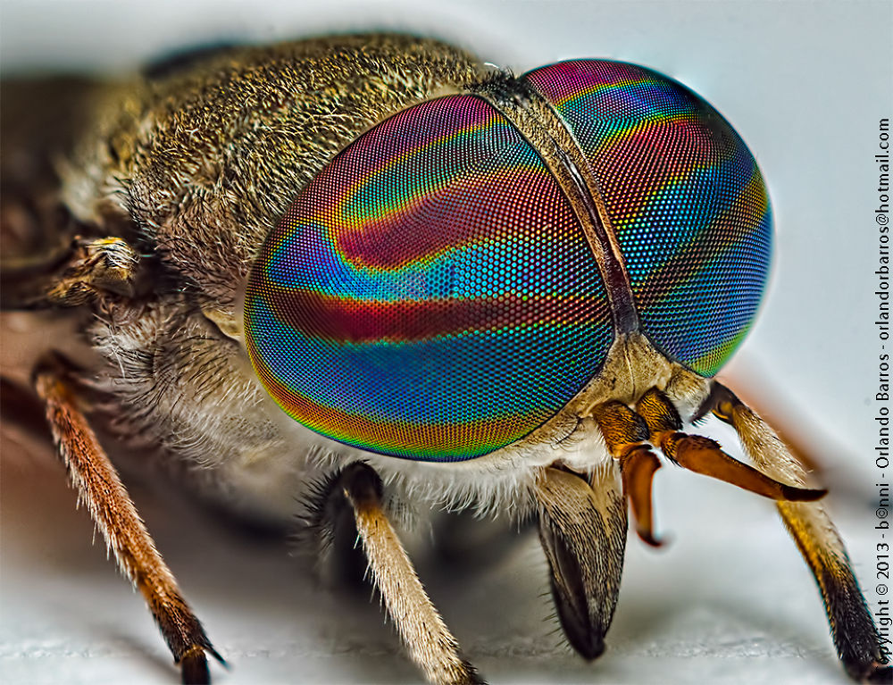 fly horse by Orlando Barros